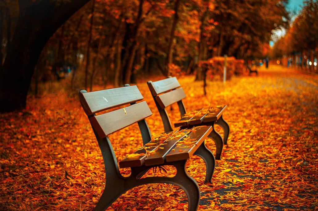 Die Raumpflicht Im Herbst Mietrecht Ratgeber Recht