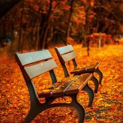 Die Räumpflicht im Herbst