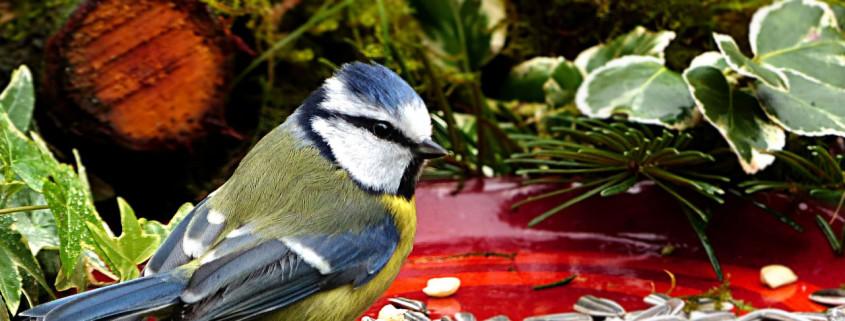Mietrecht: Vögel dürfen auf dem Balkon gefüttert werden - aber Tauben sind tabu!