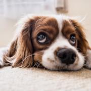 Ob Hunde trotz Verbot des Vermieters in der Wohnung gehalten werden dürfen und ich ein Bienenvolk auf dem Balkon züchten darf, lesen Sie in unserem Ratgeber.